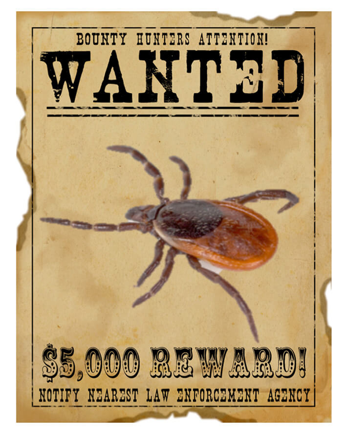 Wanted: De Teek